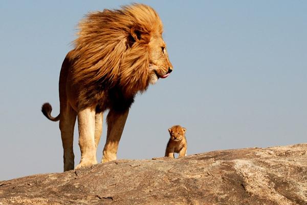 Significado de sonhar com leão