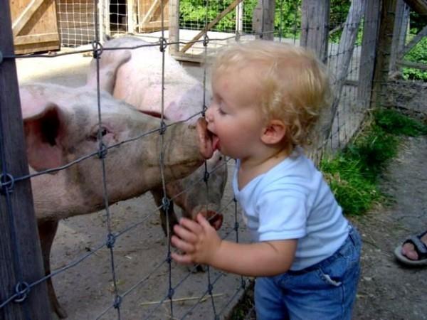 sonhar-com-porcos-2