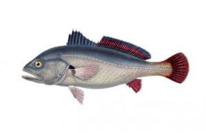 peixe no sonho significado