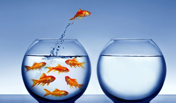 sonhar com aquario