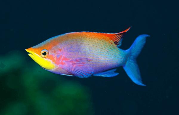 significado das cores dos peixes