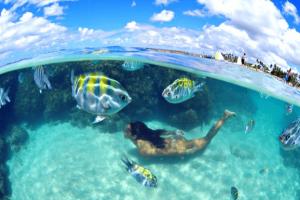Sonhar com peixe em águas cristalinas
