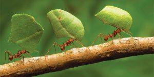 Sonhar com formiga significado