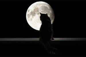 Sonhar com gato preto