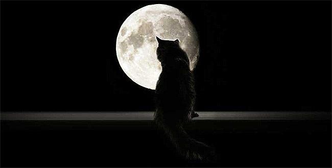 sonhar com gato preto dois