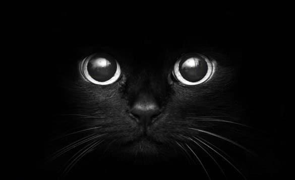 sonhar com olhos de gato