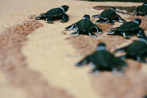 sonhar com filhote de tartaruga