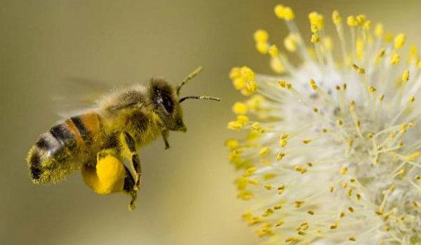 abelhas sonho