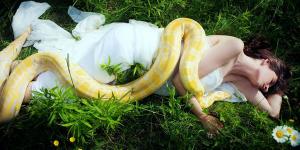 sonhar com cobra amarela te esmagando