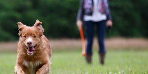 cachorro correndo com homem e guia atras
