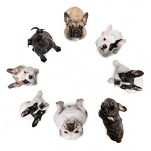 cachorros de diferentes raças em circulo