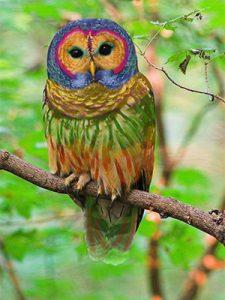 sonhar com coruja colorida