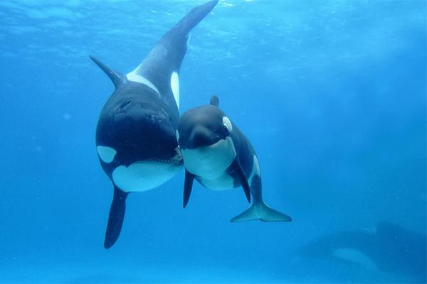sonhar com filhote de baleia