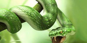 sonho com cobra verde