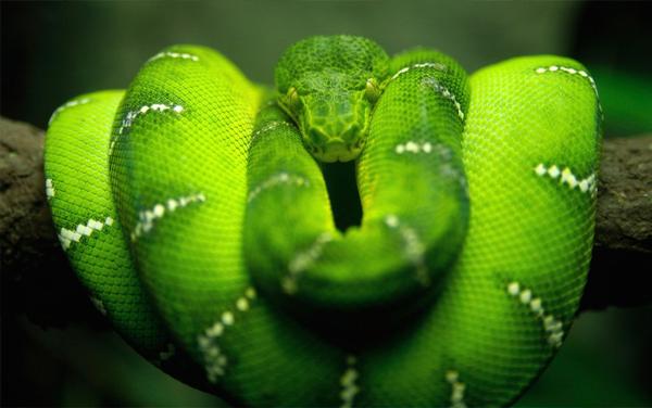 significado de sonhar com cobra verde olhando nos olhos