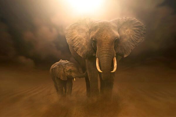 Sonhar Com Elefante O Que Significa Filhote Morto Ou Branco