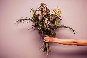 sonhar com flores mortas