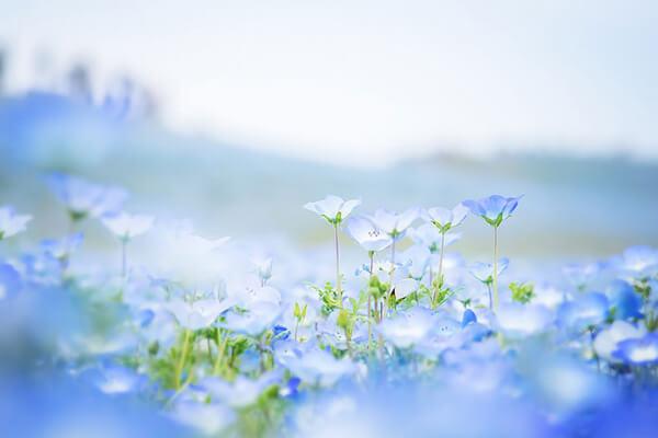 sonhar com flores significado