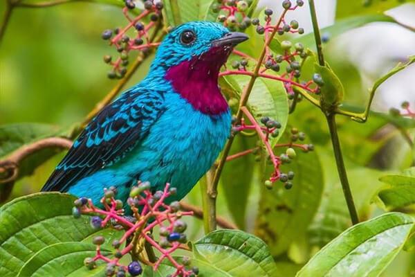Sonhar com pássaro: o que significa?