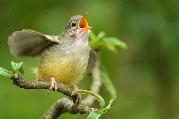 Sonhar com Pássaro Cantando