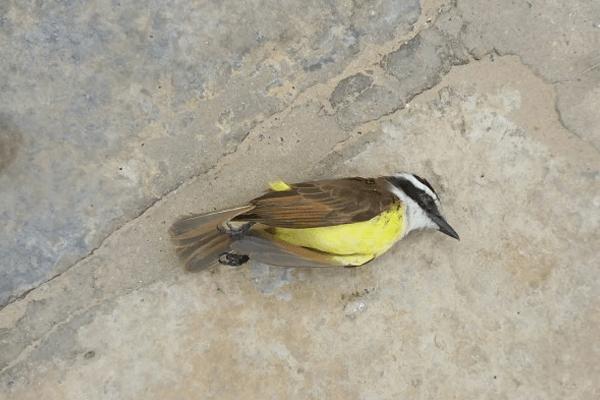 Sonhar com Pássaro morto
