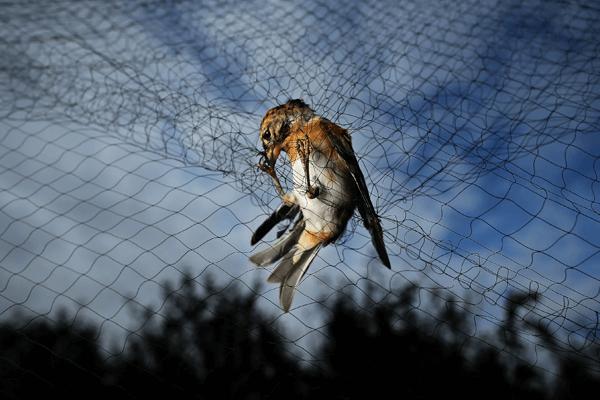 Sonhar com pássaro preso
