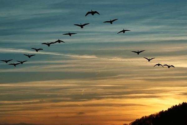Sonhar com pássaros voando