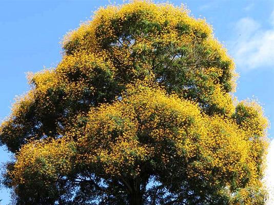 Sonhar com árvore: o que isso quer dizer?