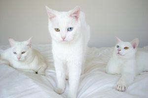 sonhar com gato branco