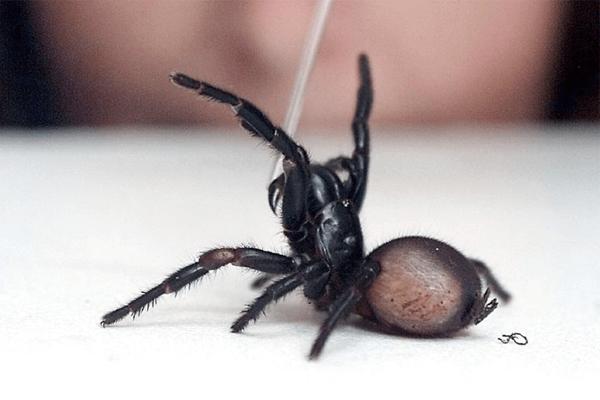 significado de sonhar com aranha