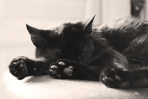 Sonhar com gato preto - Significado