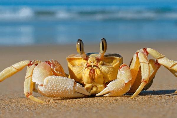 Sonhar com caranguejo: o que significa?