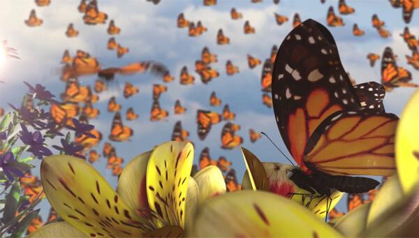 sonhar com borboletas
