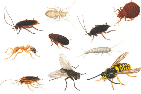 Sonhar com insetos: o que isso significa?