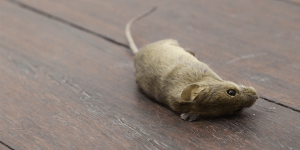 sonhar com rato morto significado