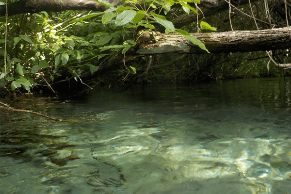 sonhar com água de rio limpa