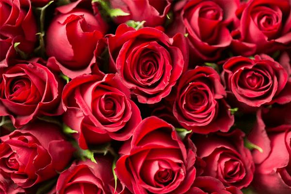 Sonhar com rosas: é um bom sinal ou não?