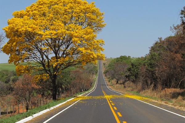 Sonhar com estrada: quais são os significados?