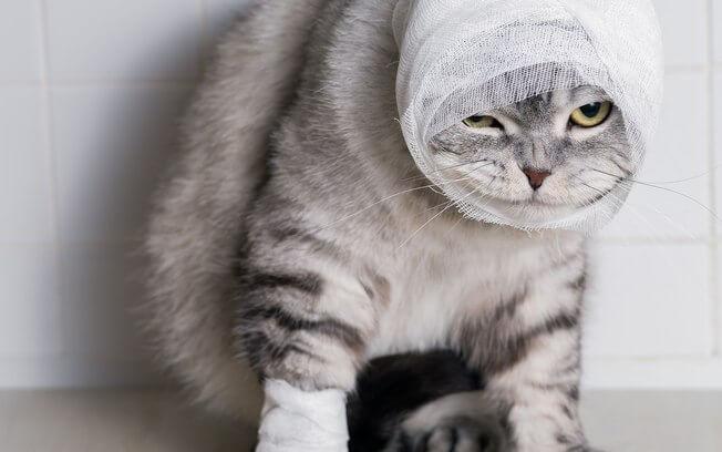 Sonhar Com Gato Morto Filhote Gato Branco Preto