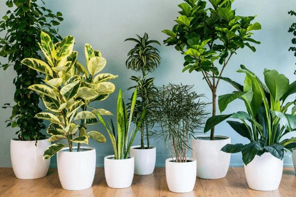 Sonhar com plantas: o que significa? Veja aqui!