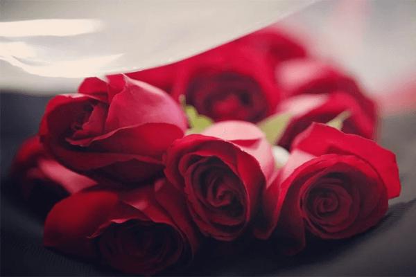 Sonhar com rosas vermelhas: o que isso quer dizer?