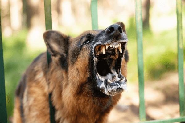 Sonhar com cachorro atacando: o que isso quer dizer? Veja aqui