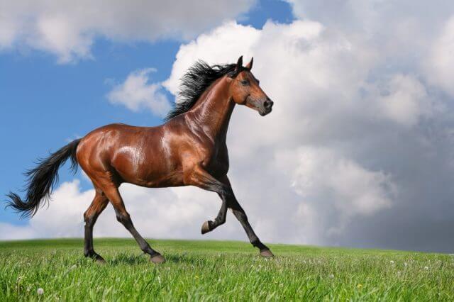 Sonhar com cavalo marrom: o que isso quer dizer? Veja aqui!