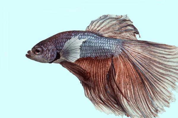 Sonhar com peixe vivo: o que significa?