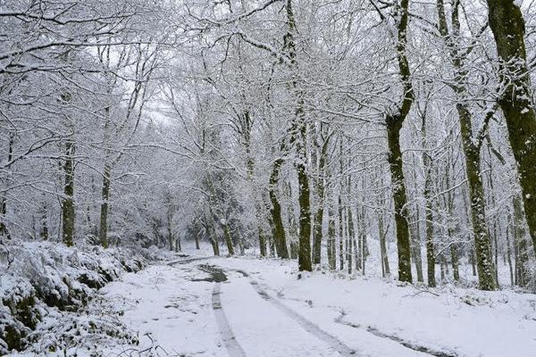 Sonhar com neve: o que isso quer dizer? Veja aqui!
