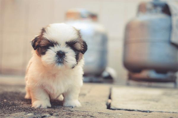 Sonhar com cão filhote