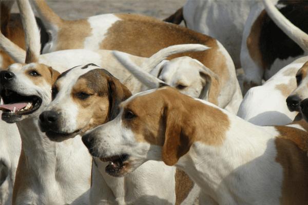 Sonhar com matilha de cachorros
