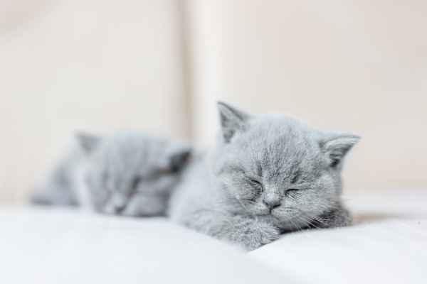 Gatos filhotes dormindo