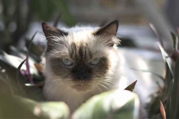 Sonhar com gato filhote bravo