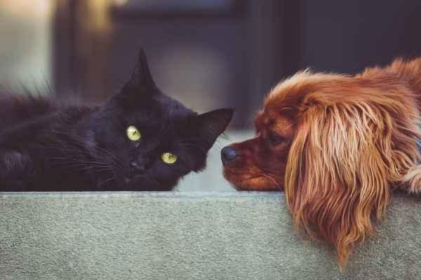 Sonhar com gato e cachorro